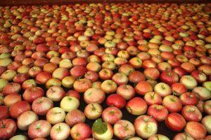 tapis pommes verger bledina