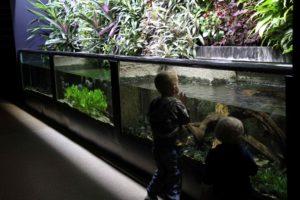 aquarium tropical porte dorée avis sortie famille ile de france