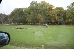 safari zoo thoiry