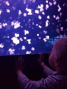 aquarium de paris méduse