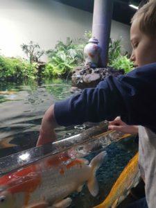 aquarium de paris bassin caresse